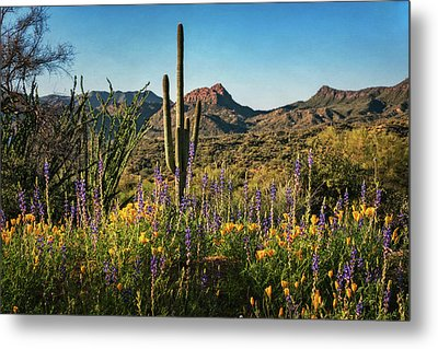 Metal Print featuring the photograph Spring In The Sonoran  by Saija Lehtonen