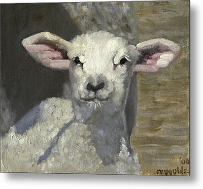 Spring Lamb Metal Print by John Reynolds
