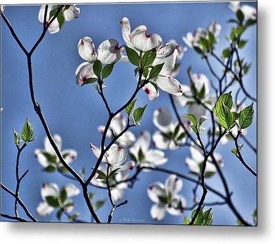 Spring Tree Blossoms Metal Print