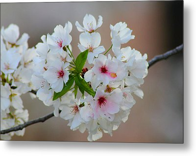 Springtime Bliss Metal Print