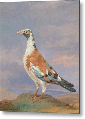 Studies Of Carrier Pigeon Metal Print by Dean Wolstenholme
