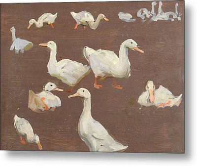 Study Of Ducks Metal Print by Alexander Mann