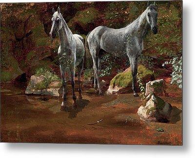 Study Of Wild Horses Metal Print