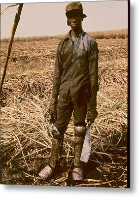 Sugar Cane Cutter Metal Print