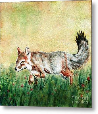 Summer Fox Metal Print by Antony Galbraith