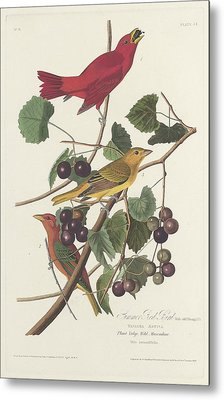 Summer Red Bird Metal Print by Rob Dreyer