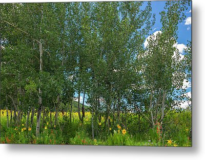 Metal Print featuring the photograph Summer Wildflowers by Tim Reaves