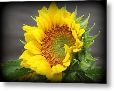 Sunflower Beauty Metal Print
