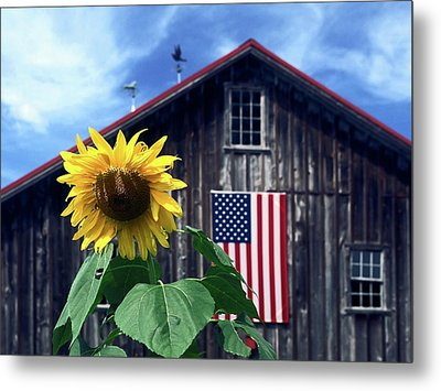 Sunflower By Barn Metal Print