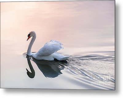 Sunset Swan Metal Print by Elena Elisseeva