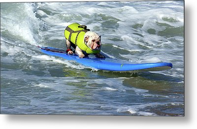 Metal Print featuring the photograph Surfing Dog by Thanh Thuy Nguyen