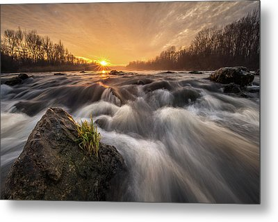 Metal Print featuring the photograph Survivor by Davorin Mance