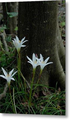 Swamp Lilies Metal Print