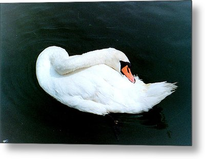 Swan At Rest  Metal Print by Richard Mansfield