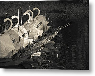 Swan Boats In A River, Boston Public Metal Print by Panoramic Images