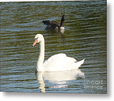 Metal Print featuring the photograph Swan by Elizabeth Fontaine-Barr