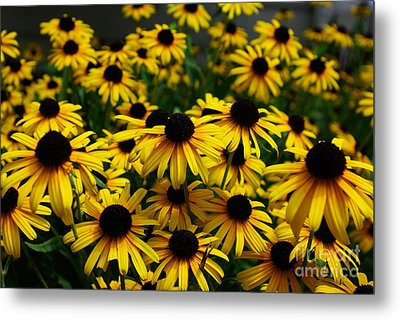 Sweet Flowers Metal Print by John S