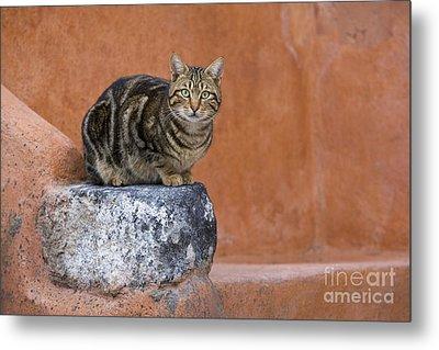 Tabby Cat On A Greek Island Metal Print