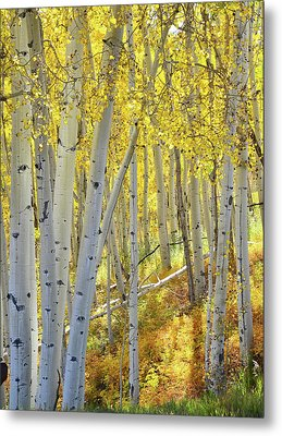 Metal Print featuring the photograph Telluride Aspens by Ray Mathis