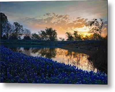 Texas Bluebonnets Metal Print by Mark Alder