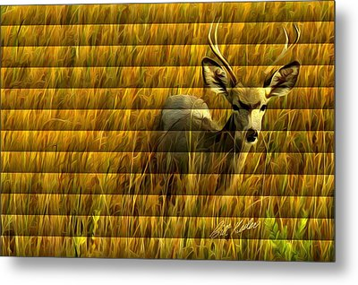 Metal Print featuring the photograph The Buck Poses Here by Bill Kesler
