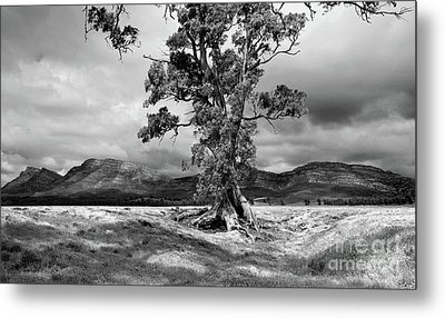 Metal Print featuring the photograph The Cazneaux Tree by Bill Robinson