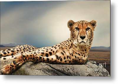 Metal Print featuring the photograph The Cheetah by Christine Sponchia