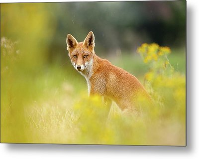 The Fox And The Flowers Metal Print