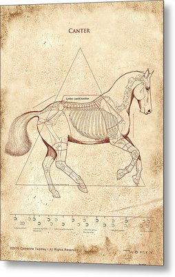 The Horse's Canter Revealed Metal Print