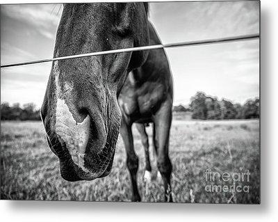 the Horses of Blue Ridge 4 Metal Print