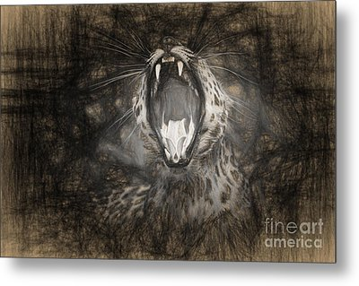 The Leopard's Tongue Rolling Roar IIi Metal Print