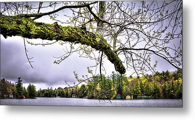 The Pond In Old Forge Metal Print by David Patterson
