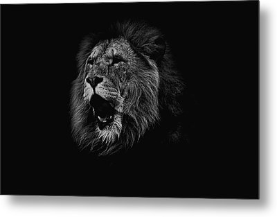 The Roaring Lion Metal Print