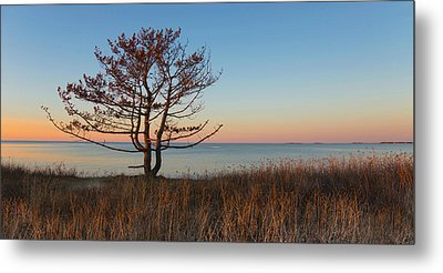 Metal Print featuring the photograph The View by Robin-lee Vieira