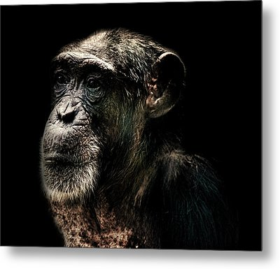 The Wise Metal Print by Martin Newman