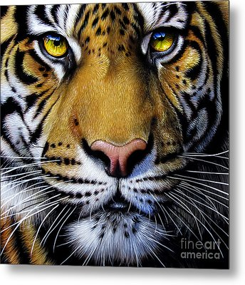 Tiger  Metal Print by Jurek Zamoyski