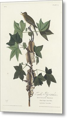 Traill's Flycatcher Metal Print by John James Audubon