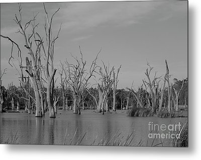 Metal Print featuring the photograph Tree Cemetery by Douglas Barnard