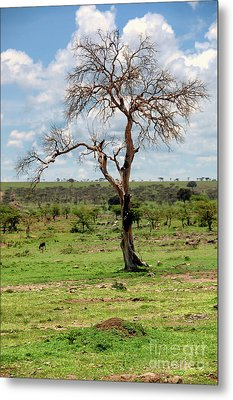 Metal Print featuring the photograph Tree by Charuhas Images