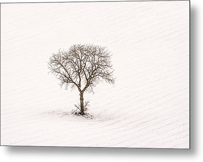 Tree Isolated In Winter. Auvergne. France Metal Print by Bernard Jaubert