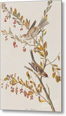 Tree Sparrow Metal Print by John James Audubon