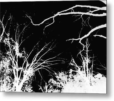 Metal Print featuring the photograph Tree Tops by Max Mullins