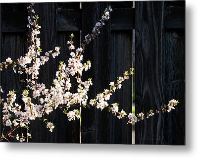 Trees - Blooming Flowers Metal Print by Donald Erickson