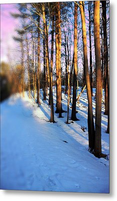 Trees Photography Metal Print by Mark Ashkenazi