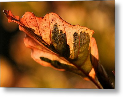 Tri-color Beech In Autumn Metal Print by Angela Rath