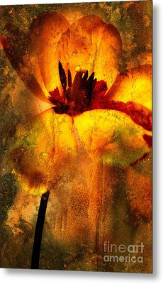 Tulip Metal Print by Bernard Jaubert