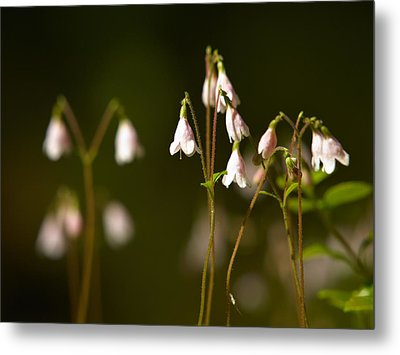 Twinflower Metal Print