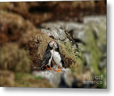 Two Puffins In Love Metal Print