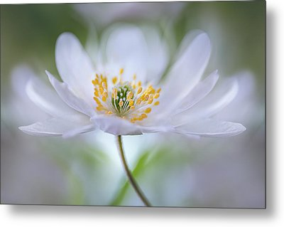 Untitled Metal Print by Mandy Disher
