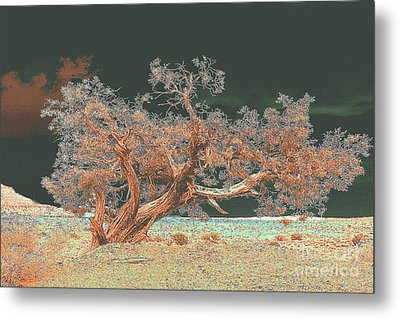 Metal Print featuring the photograph Unusual Tree - Digital Painting by Merton Allen